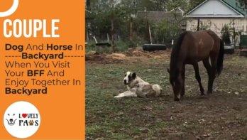 Hond en paard spelen met elkaar