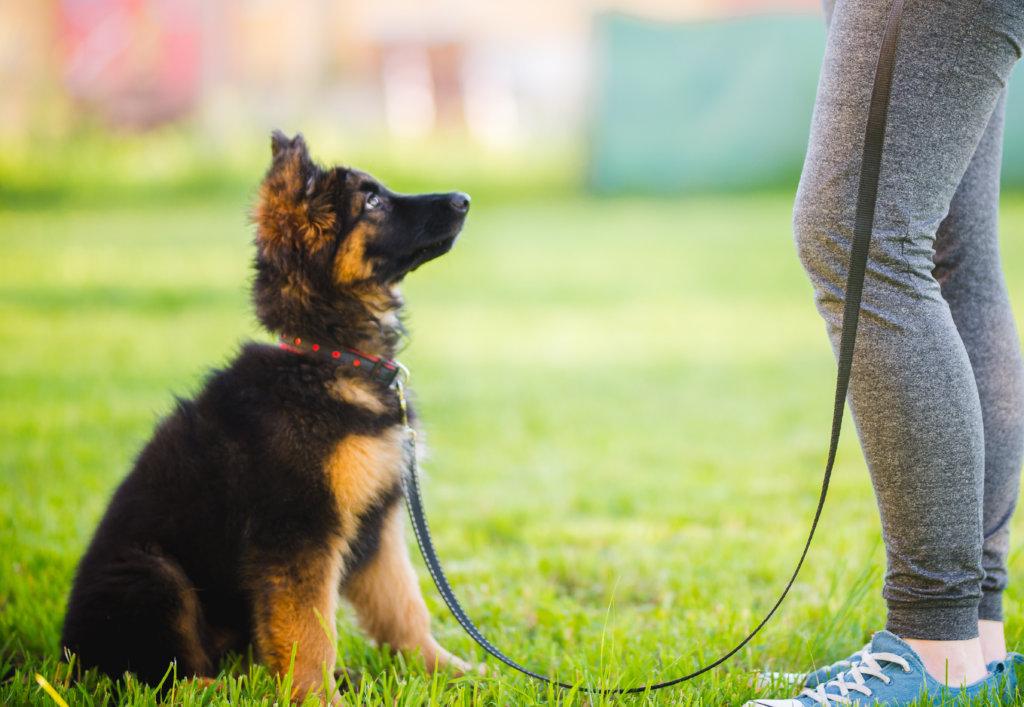 puppy uitlaten: socialisatie