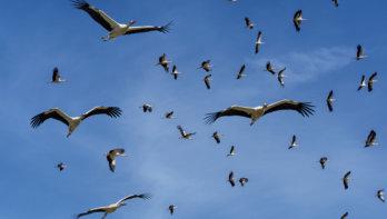 De tocht van trekvogels