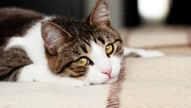 Kat opeens onzindelijk