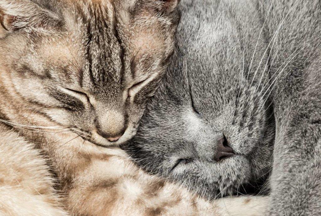 hartverwarmende dierenfoto's kat