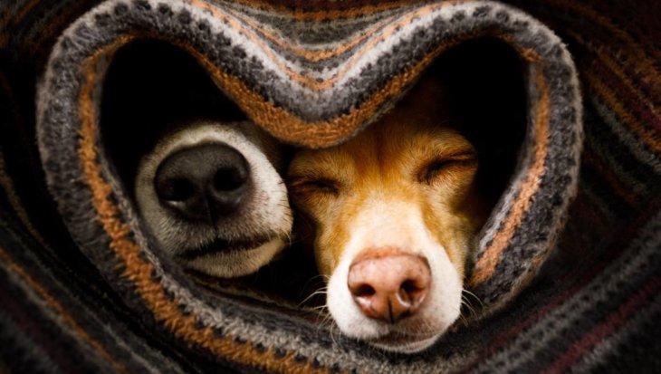 10 x hartverwarmende dierenvriendschap