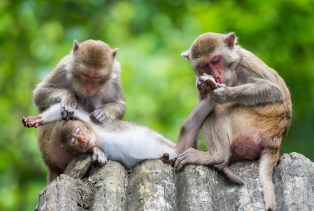 hartverwarmende dierenfoto's apen