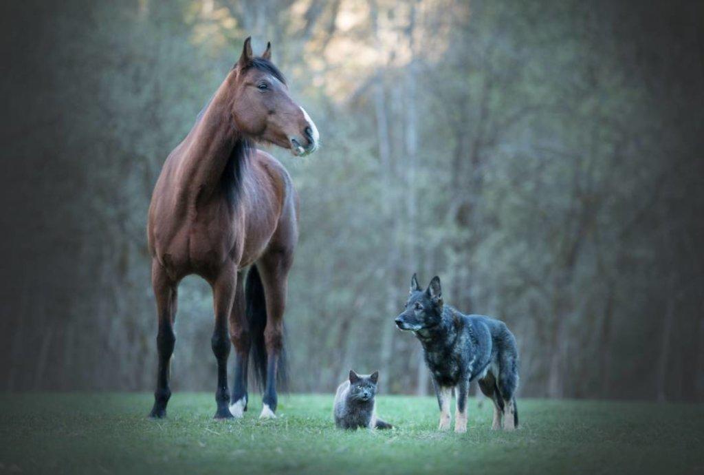 hartverwarmende dierenfoto's vriendschap
