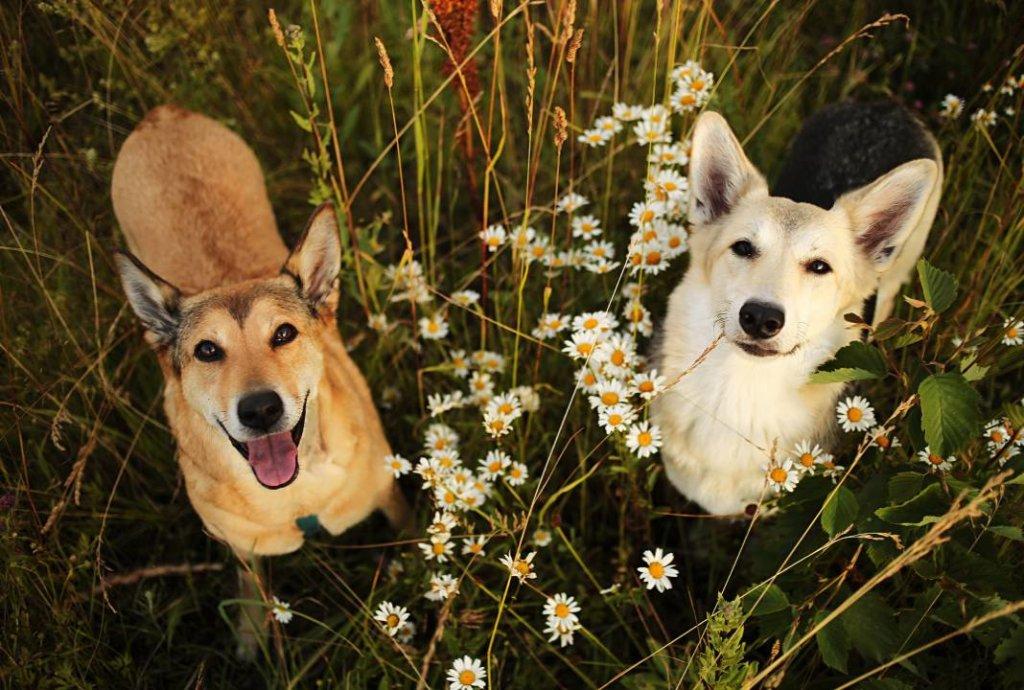 hartverwarmende dierenfoto's ondeugende honden