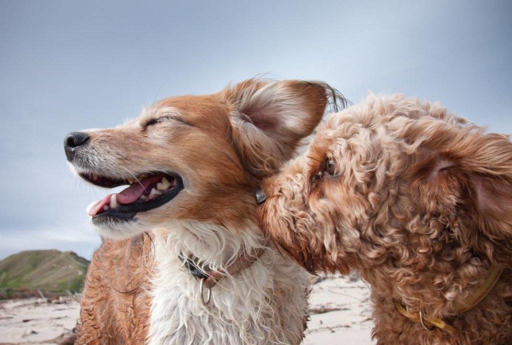 hartverwarmende dierenfoto's honden in de wind