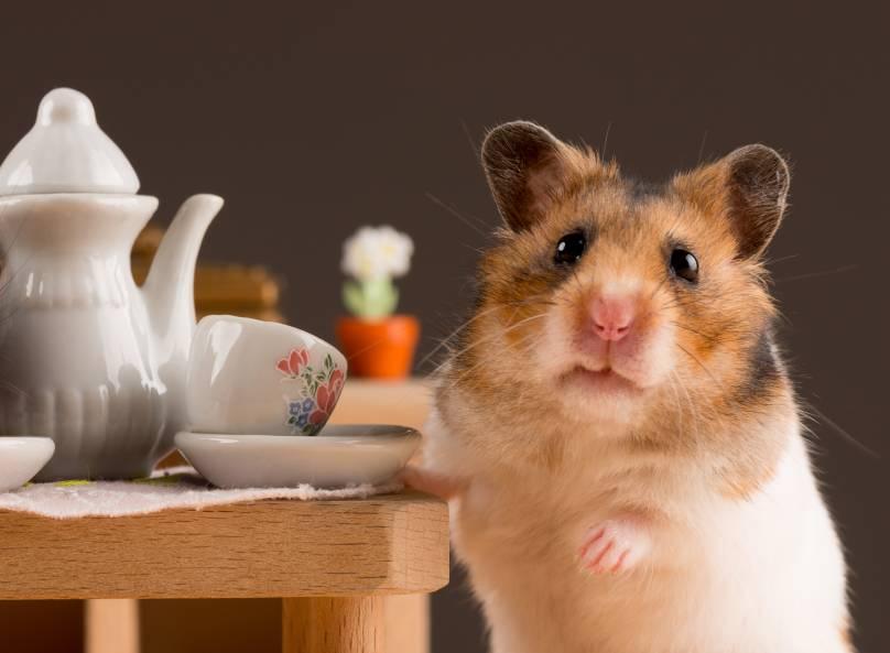 hamsterkooi leuke inrinrichting verblijf