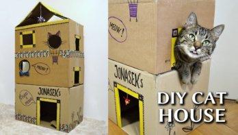 Maak van dozen een kattenhuis
