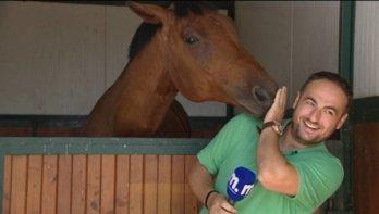 Paard verliefd op reporter