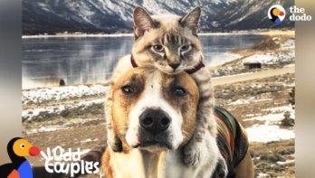 Schitterende vriendschap tussen hond en kat
