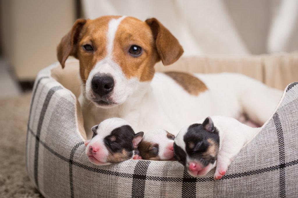 Socialisatiefase puppy ongeboren