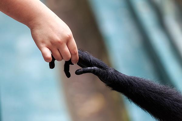 interactie met wilde dieren