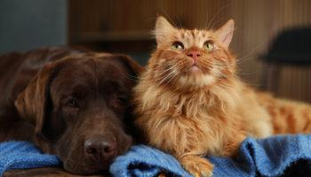 stijgende temperaturen hond en kat