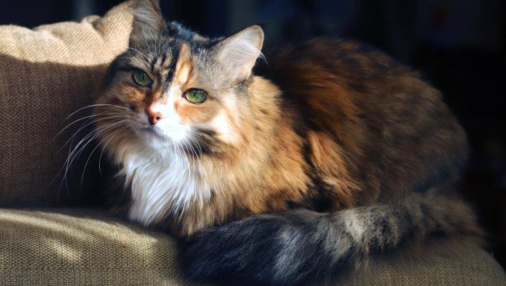 Meer dan 500.000 katten in Nederland hebben dagelijks pijn