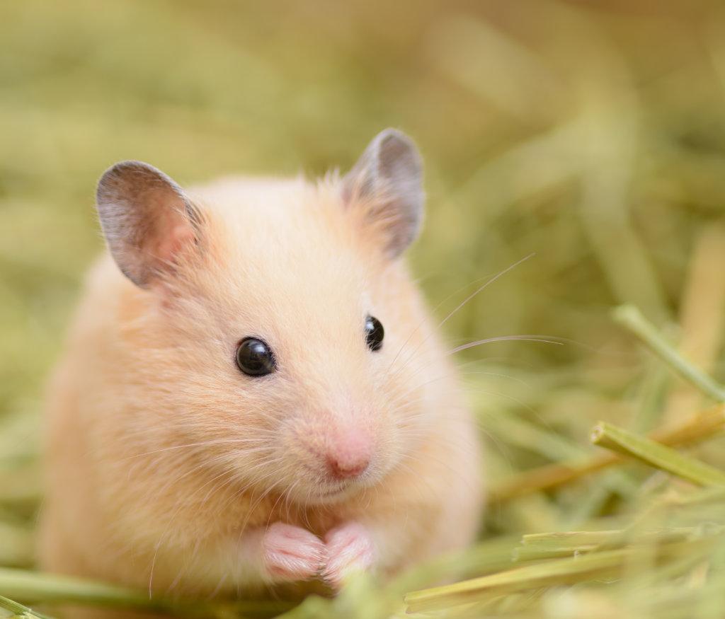 hamsterkooi bodembedekking