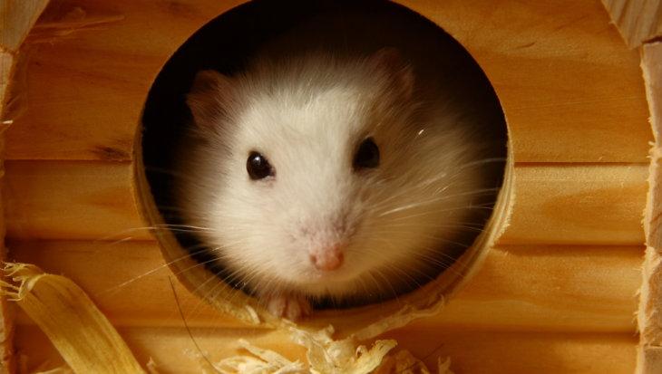 Een fijn hamsterverblijf