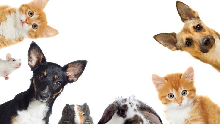 Quiz Een diervriendelijke huis