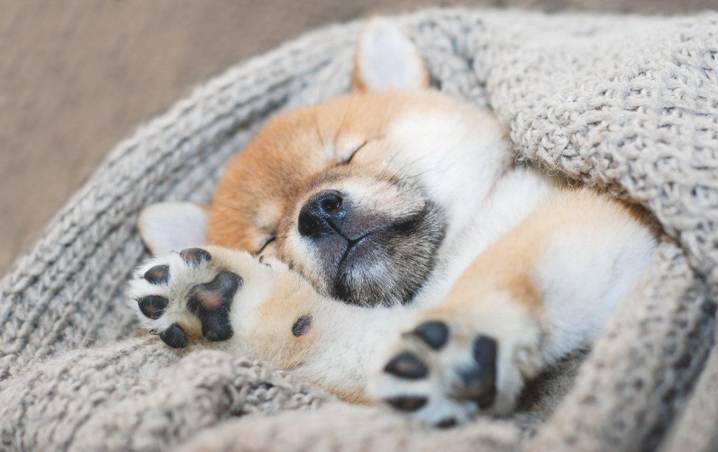 Socialisatiefase puppy: rusten