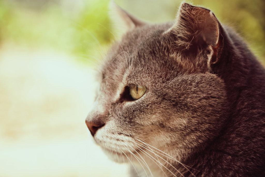 chronishe pijn katten