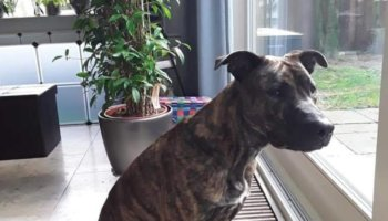 Hond nieuw thuis forever home