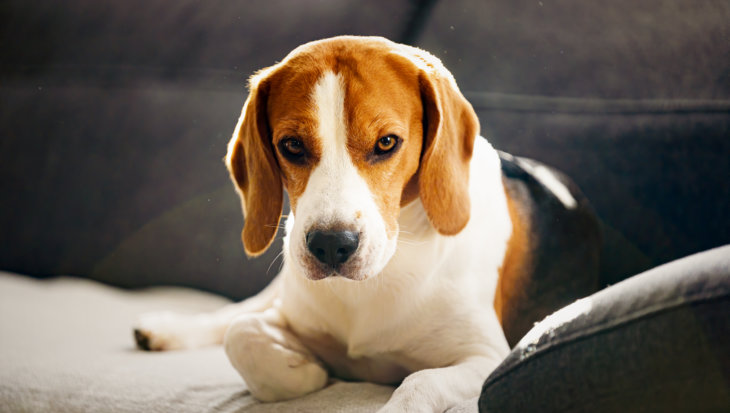 Hoe lang kan een hond alleen zijn?