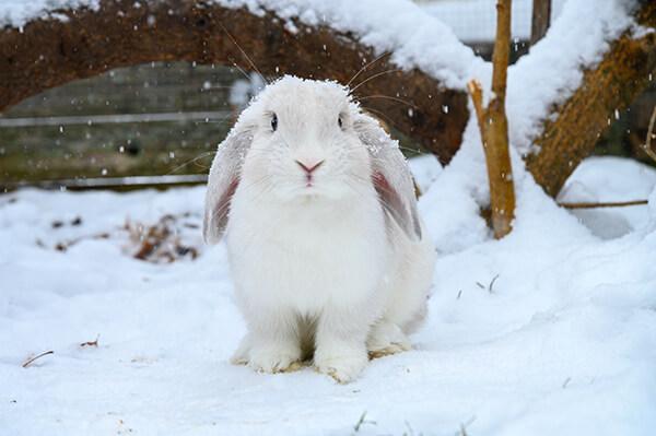 konijn buiten houden