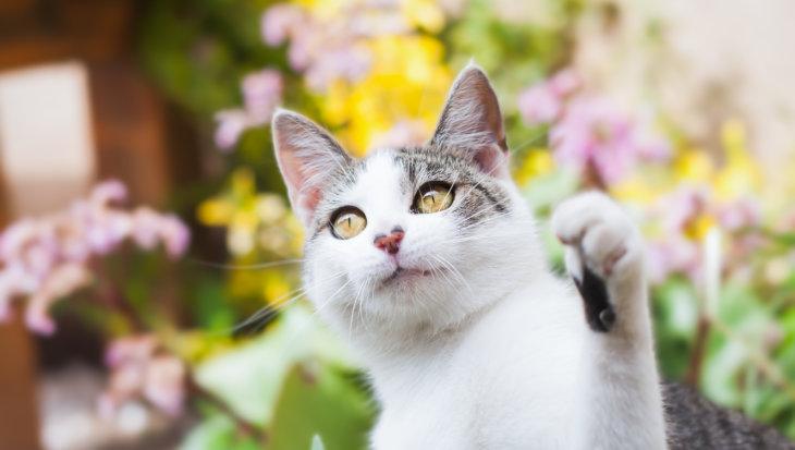 Castratie en sterilisatie kat