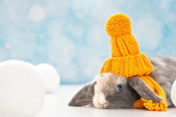 Zijn jouw konijnen klaar voor de winter?