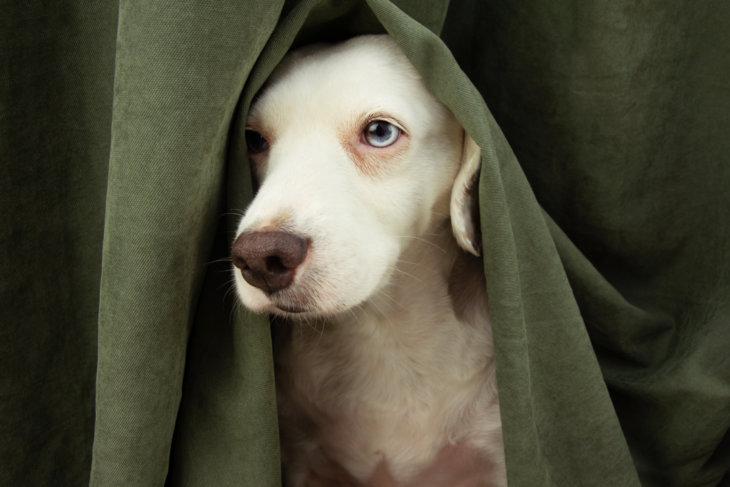 hond alleen stress