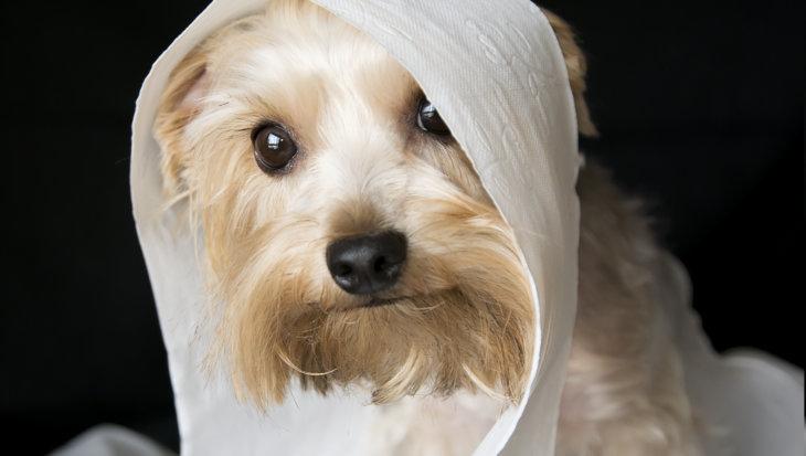 Zelf hondenspeeltjes maken