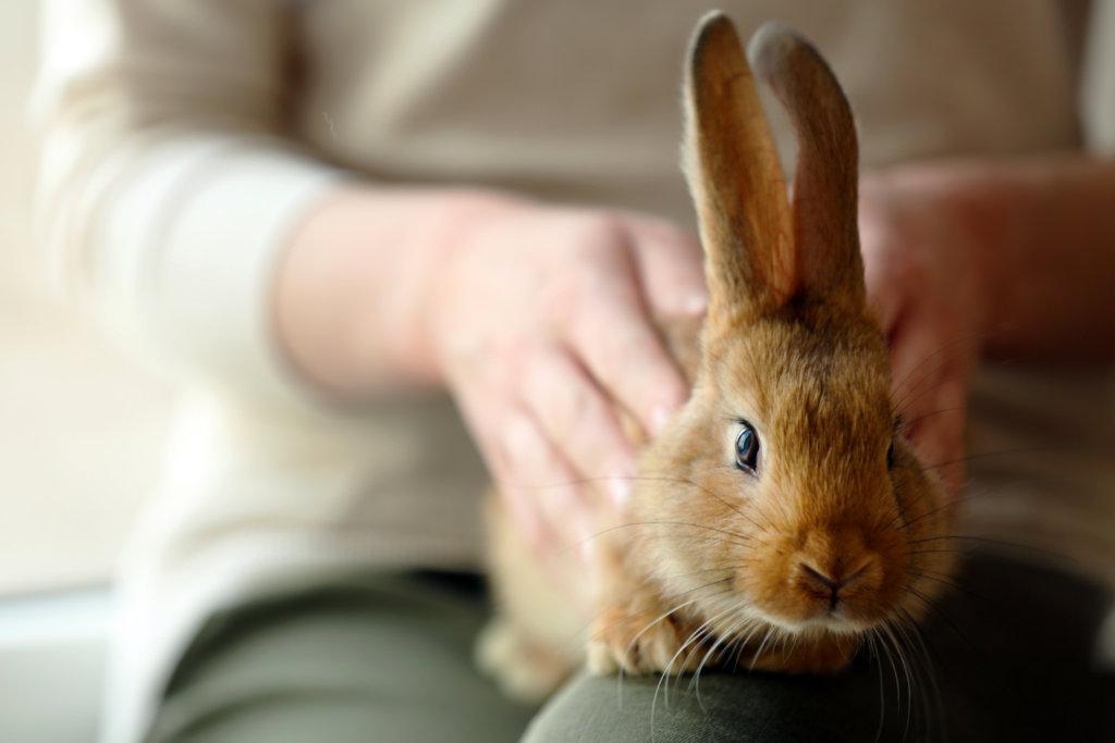 konijn bijtgedrag