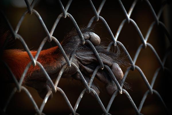 Wereldwijde steun voor verbod op handel in wilde dieren