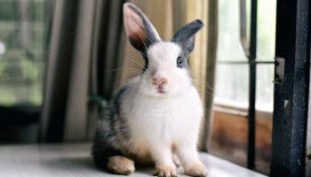 konijn bijt