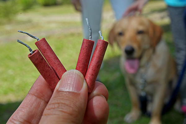 Vuurwerkverbod is een zegen voor dieren
