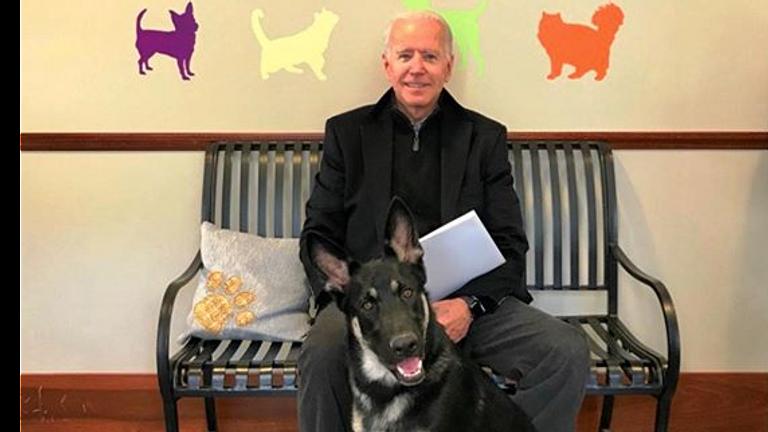 honden in het Witte Huis