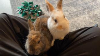 Verhuisdieren van de week: Layla en Lola