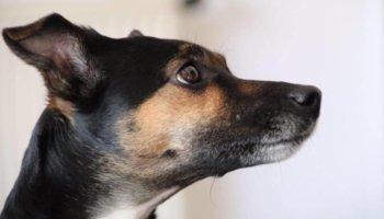hond lana nieuw thuis