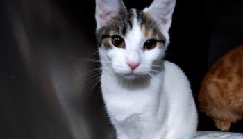 kitten verhuisdier asiel