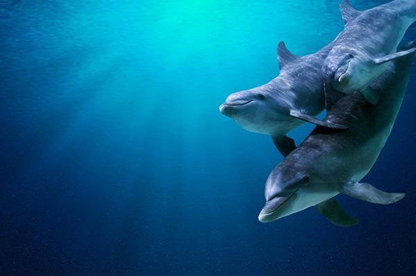 zeedieren dolfijnen
