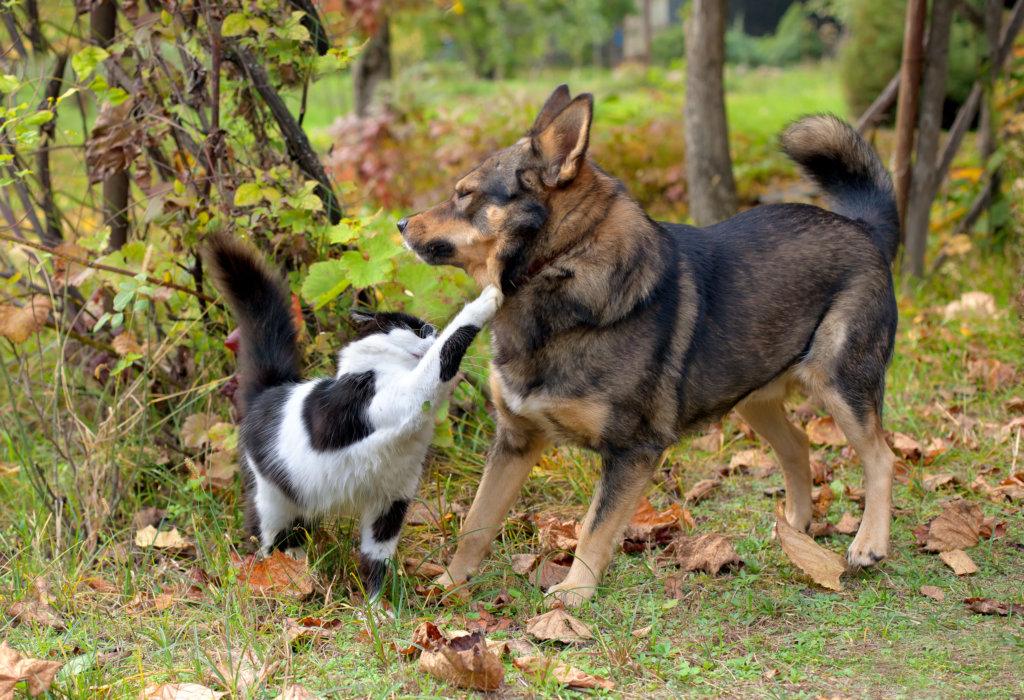 hond en kat samen: wennenperiode