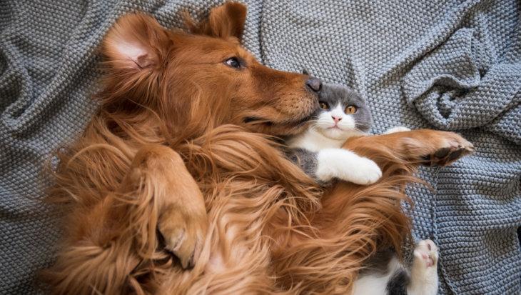 Kunnen een hond en kat aan elkaar wennen?
