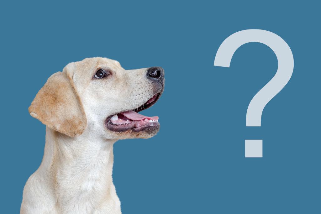 hond luistert niet omdat hij het niet snapt