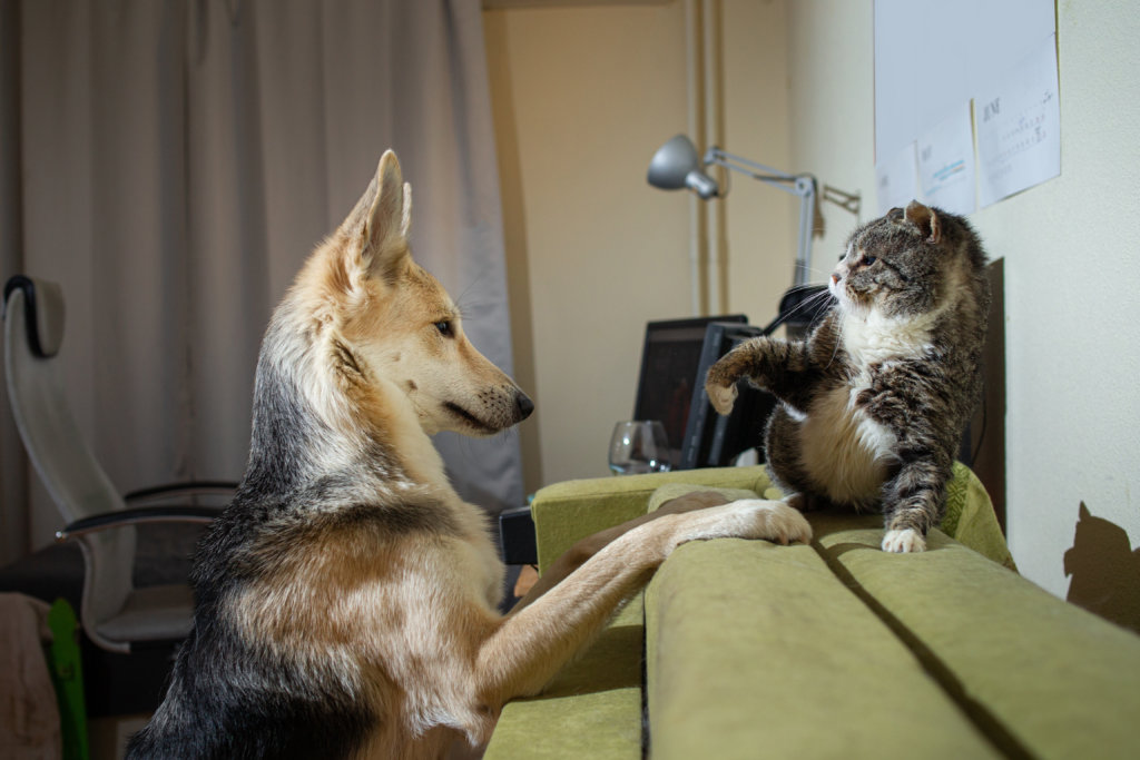 hond en kat introductie kennismaking