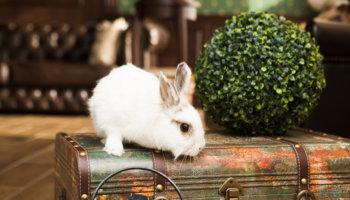 konijn zindelijk maken