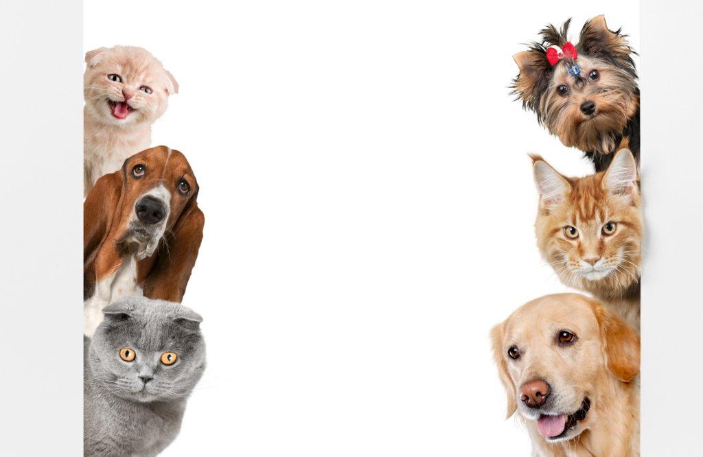 hond en kat samen matchen