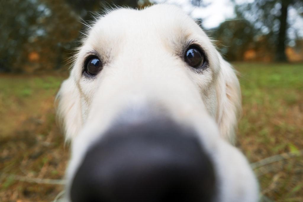 hond luistert niet afgeleid