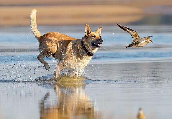 Welk hondengedrag is normaal en wanneer moet je ingrijpen?