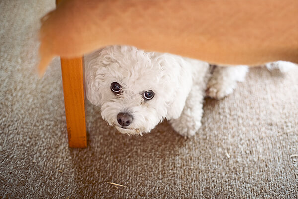 angstige hond