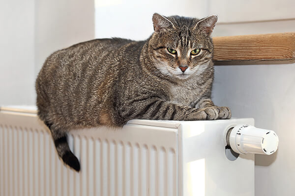Je kat en droge verwarmingslucht