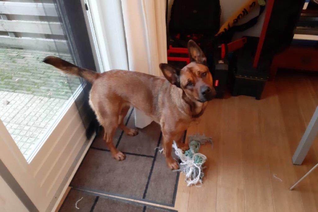hond nieuw thuis asiel